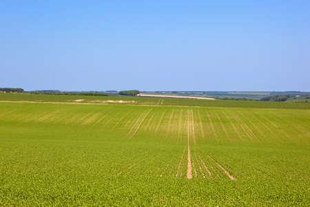 rolling hills: scenic agricultural landscape with rolling hills in the yorkshire wolds under a blue sky