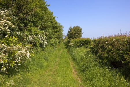 hedgerows: a scenic bridleway with mixed hedgerows in the yorkshire wolds under a clear blue sky in summer Stock Photo