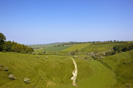 chalky: a hilly yorkshire wolds pasture with grazing sheep and a chalky track under a blue sky in summer Stock Photo