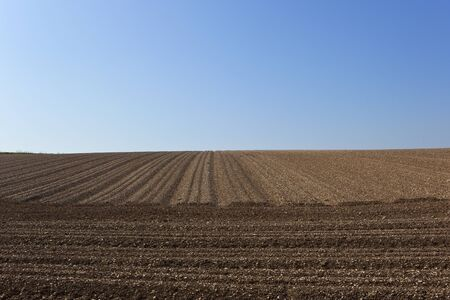 chalky: a chalky potato field with lines and furrows under a blue sky in the yorkshire wolds Stock Photo