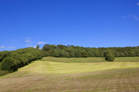 hay field: a hilly freshly cut hay field in the yorkshire wolds with woodlands under a blue sky in summer