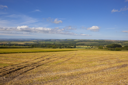 hay field: a scenic hay field in the yorkshire wolds with patchwork fields under a blue cloudy sky Stock Photo