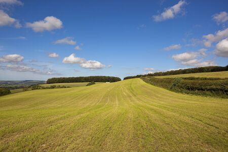 hay field: a freshly cut hay field with views of the yorkshire wolds under a blue cloudy sky in summer