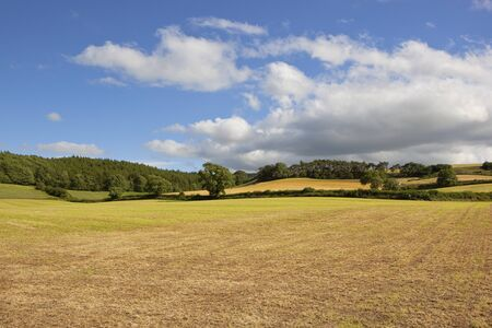 hay field: a freashly cut hay field in scenic farmland with woodlands and rolling hills under a blue sky in summer