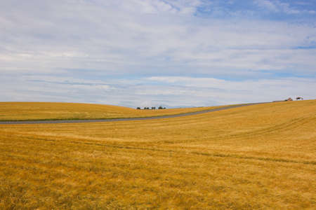 rolling golden barley fields with a disused farm in the yorkshire wolds in summer under a blue cloudy sky Stock Photo