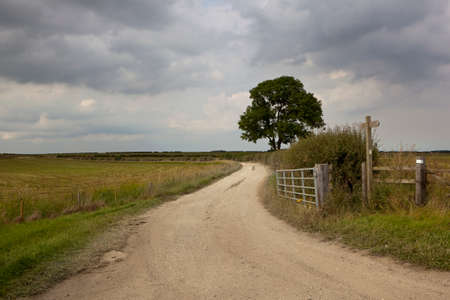 ash tree: a footpath in the yorkshire wolds with farm gate and ash tree under a cloudy sky in summer