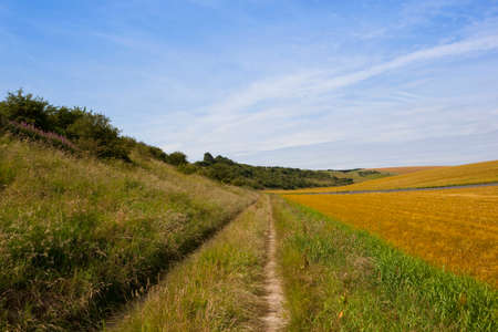 a scenic farm track with a wooded hillside and ripening barley fields under a blue cloudy sky in summer