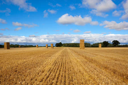 hedgerows: tall golden hay stacks in a stubble field with trees and hedgerows under a blue cloudy sky in summer