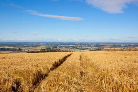vale: a golden barley crop overlooking the vale of york under a blue sky in summer Stock Photo