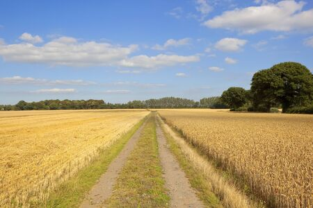 a rural farm track beside a harvested golden wheat field and woodland copses in yorkshire under a blue cloudy sky in summer