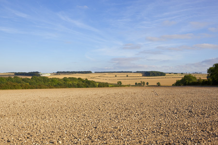 copse: newly cultivated soil with woodlands and scenery in the yorkshire wolds under a blue sky