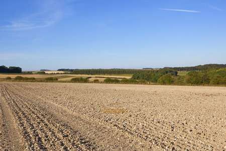 hedgerows: cultivated chalky soil with hills and hedgerows in the yorkshire wolds under a blue sky in summer