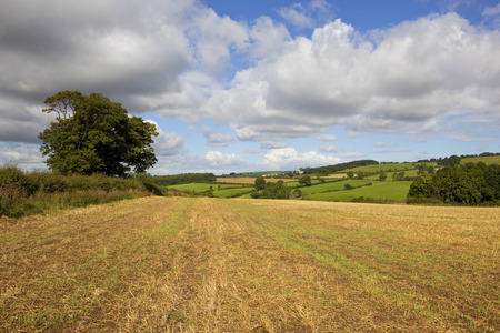 a harvested field with hedgerows and scenery in the yorkshire wolds under a blue cloudy sky in summer