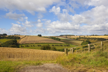 harvest time in the yorkshire wolds with golden wheat and patchwork fields under a blue cloudy sky