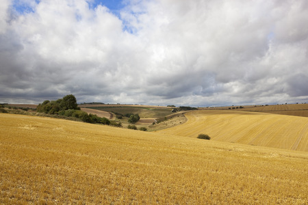 hedgerows: golden harvested barley fields with hills and hedgerows in the yorkshire wolds under a blue cloudy sky Stock Photo