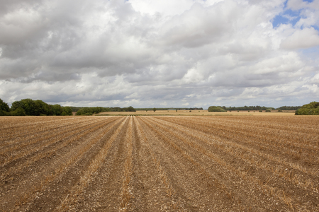 hedgerows: potato rows in chalky soil with trees and hedgerows under a cloudy sky in the yorkshire wolds Stock Photo