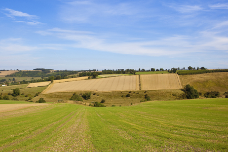 hedgerows: cultivated hillside fields with woodlands and hedgerows under a blue sky in summer