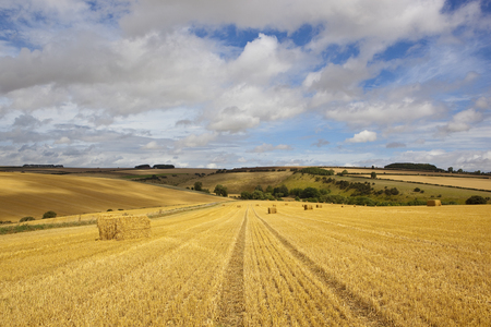 hedgerows: straw bales in a harvested barley field with hills and hedgerows under a blue cloudy sky in the yorkshire wolds