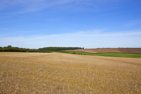 canola: harvested canola field in the yorkshire wolds with scenery under a blue sky in late summer Stock Photo