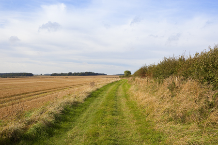 a section of the minster way footpath in the yorkshire wolds beside a harvested field with a hawthorn hedgerow under a blue cloudy sky
