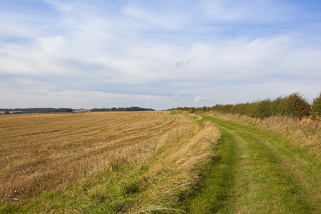 grassy: a grassy bridleway in the yorkshire wolds beside a harvested field under a blue sky in late summer Stock Photo