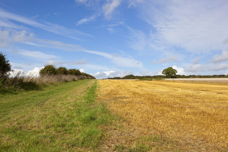 a grassy footpath through scenic agriculture with hawthorn hedgerow under a blue cloudy sky in late summer
