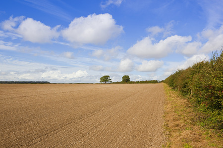 a cultivated field with chalky soil beside a hawthorn hedgerow in autumn under a blue cloudy sky