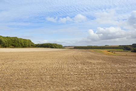 copse: a scenic farming landscape with harvested fields and pheasent cover beside woodland under a blue mackeral sky in late summer