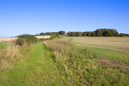 copse: a small woodland copse on a hill with a country road and wildflowers under a blue sky in the yorkshire wolds
