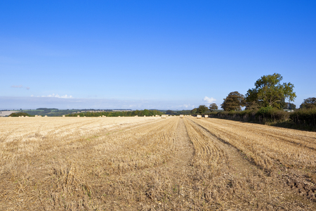 a field of straw stubble and round bales under a blue sky in autumn in the yorkshire wolds