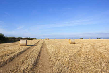 a straw stubble field on a hilltop in the yorkshire wolds with round bales at harvest time under a blue sky