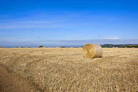 wispy: straw bales at harvest time in the yorkshire wolds under a blue sky with wispy cloud in autumn
