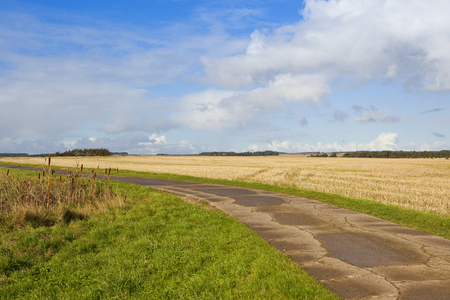 copse: a concrete bridleway in agricultural farmland in autumn under a blue sky with a small pine copse in the yorkshire wolds