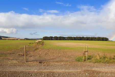 copse: a woodland copse in autumn and patchwork fields in the agricultural scenery of the yorkshire wolds under a blue cloudy sky with a rainbow Stock Photo