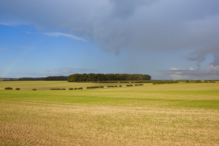 woodland scenery: a woodland copse in autumn under a dramatic sky in the agricultural scenery of the yorkshire wolds with a rainbow Stock Photo