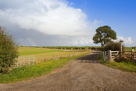 ash tree: a farm gate with limestone bridleway and ash tree under a showery sky in autumn in the yorkshire wolds
