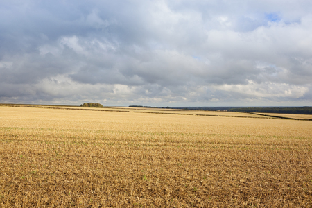 rolling hills: rolling hills with straw stubble overlooking the vale of york under a blue cloudy sky in autumn in the yorkshire wolds