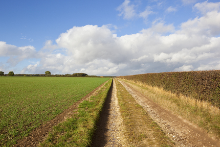 a scenic limestone bridleway beside a wheat crop and a hawthorn hedgerow under a blue cloudy sky in autumn in the yorkshire wolds
