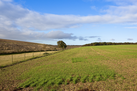 fields and woodland on a country bridleway with a fence and ash tree under a blue cloudy sky in autumn