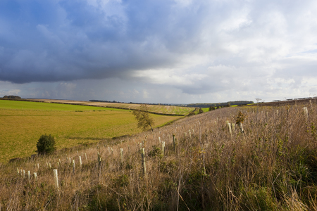 scenic yorkshire wolds autumnal landscape with a small plantation of young trees under a blue cloudy sky Stock Photo
