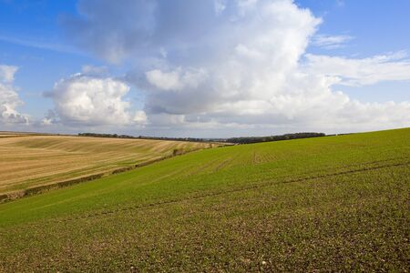 rolling agricultural landscape at harvest time in the yorkshire wolds under a blue sky with fluffy white clouds