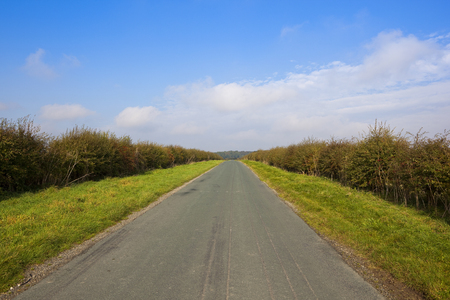 hedgerows: a small country highway with hawthorn hedgerows on both sides under a blue cloudy sky in the yorkshire wolds