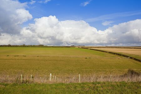 hedgerows: grazing pastures with a bridleway going in to a valley with hawthorn hedgerows under a blue cloudy sky in the yorkshire wolds Stock Photo