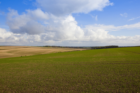 rolling hills in a yorkshire wolds agricultural landscape with crops and hedgerows under a blue sky with fluffy white clouds in autumn