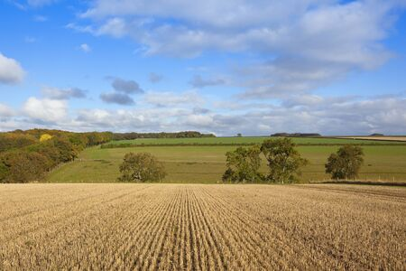 a straw stubble field with lines running into a valley with autumnal woodlands and grazing pastures in a yorkshire wolds landscape under a blue cloudy sky with fluffy clouds Stock Photo