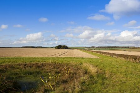 copse: a harvested straw stubble field with a dew pond and woods in a scenic yorkshire wolds landscape under a blue cloudy sky in autumn
