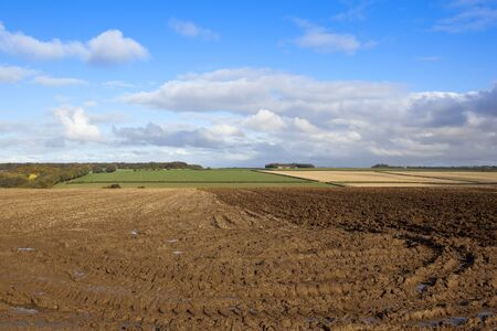 hedgerows: a partially plowed field near a wooded valley in a yorkshire wolds landscape with hills and hedgerows under a blue cloudy sky in autumn Stock Photo