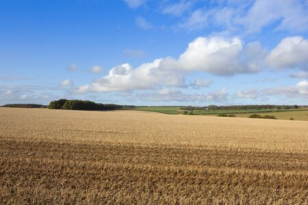 a harvested straw stubble field and woods in a scenic yorkshire wolds landscape under a blue cloudy sky in autumn Stock Photo