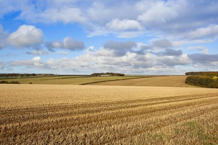 autumnal woodland in a yorkshire wolds valley with a harvested straw stubble field under a blue cloudy sky Stock Photo