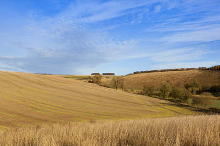 wispy: sweeping straw stubble fields and dry grass in an autumn farming landscape in the yorkshire wolds under a blue sky with white wispy cloud